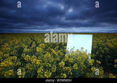 Reflection on a large mirror of a rapeseed cultivation field. Natural Park of Las Lagunas de Villafafila. zamora. Spain - Stock Image