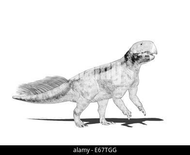 Dinosaurier Psittacosaurus / dinosaur Psittacosaurus - Stock Image