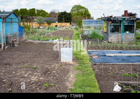 An allotment plot in England UK prepared and ready for planting in England UK. - Stock Image