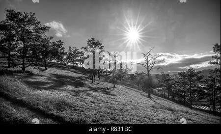 Sunrise on the plateau when the sun woke up to the pine forest below the hill to welcome the new day in peace. - Stock Image