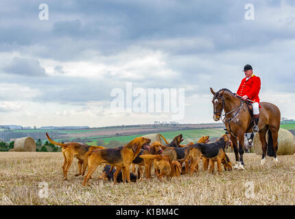 The Master of The Cranwell Bloodhounds Hunt with his hounds resting on a days hunting - Stock Image