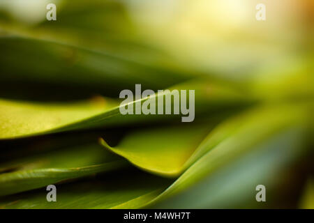 Closeup of fresh leaves on green nature background. Selective focus. Shallow depth of field. Soft focus - Stock Image