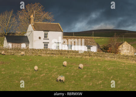 Brumwell Street Farm, Upper Teesdale, UK in dramatic winter sunshine and a dark sky - Stock Image
