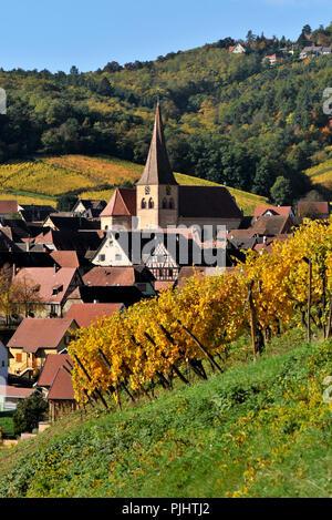 village of Niedermorschwihr in his vineyard in autumn - Stock Image