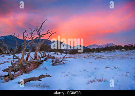 Rocky Mountain National Park, sunset, winter, Landscape, snow, fallen tree high contrast - Stock Image