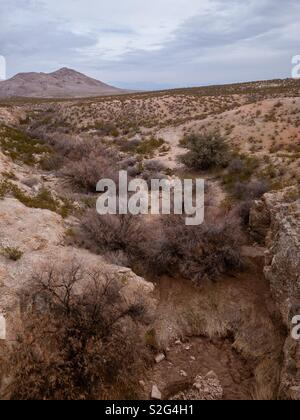 In the New Mexico desert - Stock Image