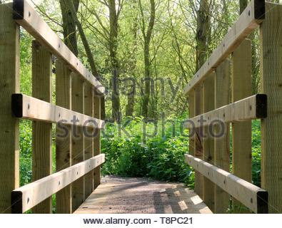 a symmetrical view of a wooden bridge, leading into the enchanted woods - Stock Image