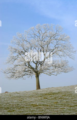 A lone rime-covered tree above the village of East Morton - Stock Image