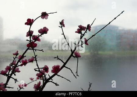 Branch with artificial flowers on a background of houses through the transparent film - Stock Image