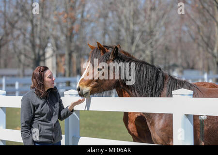 Woman interacting with two beautiful horses. - Stock Image