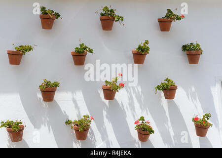 A white wall full of flower pots. - Stock Image