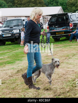 The Barlow Hunt Dog Show - A lurcher dog in the show ring - Stock Image