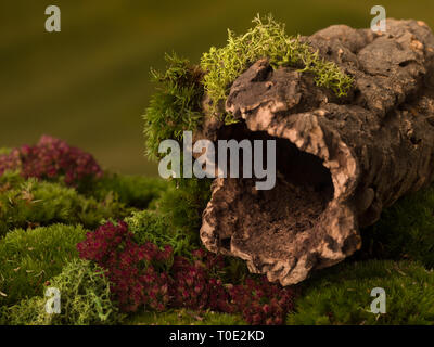 Cork tree bark with a dark hole on moss that can be used as nature backgrounds for fairy photos - Stock Image