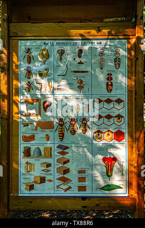 Italy Piedmont Turin Valentino botanical garden -  Tree Grove -beehives - sign about the world of bees - Stock Image
