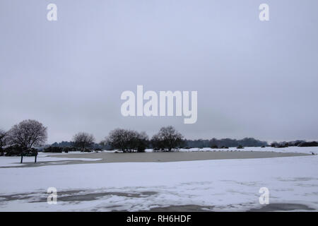 New Forest, Hampshire. 1st Feb 2019. UK Weather:  Beuatiful snowy scenes in the New Forest.  Credit: pcpexclusive/Alamy Live News - Stock Image