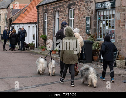 Lindisfarne or Holy Island, Northumberland coast south of Berwick-on-Tweed, England. Visitors walking dogs. - Stock Image
