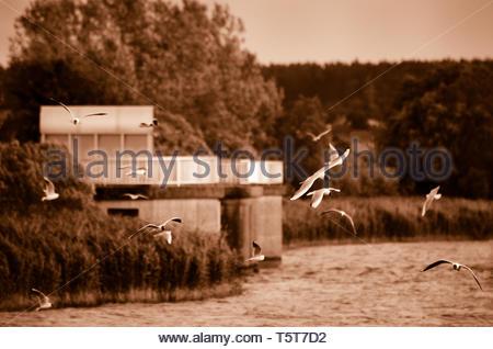 Seagulls at the lake - Stock Image