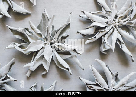 Dried White Sage on Gray Table - Stock Image