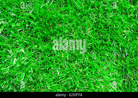 Green lawn - Stock Image