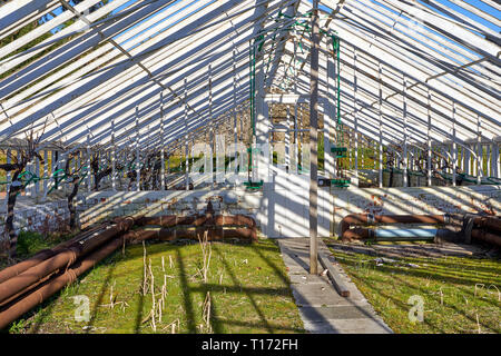 Greenhouse in the grounds of St Fagans Castle, St Fagans National Museum of History, Cardiff, South Wales - Stock Image