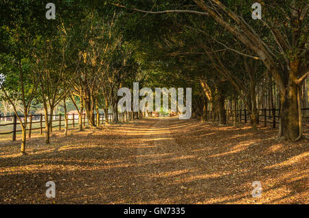 footpath between tunnel of trees in countryside of  Brazil - Stock Image