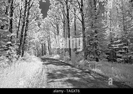 Road in forest  Nestor Falls Ontario Canada - Stock Image