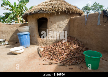 Shea nuts at a Mamprusi household in the village of Sor No. 1, Gonja triangle, Damango district, Ghana. - Stock Image