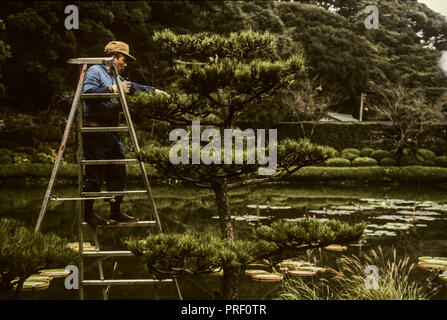 A gardener pruning trees in a garden in Beppu, Oita province on the southern island of Kyushu - Stock Image