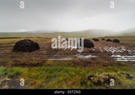 soggy peat stacks in the mist - Stock Image