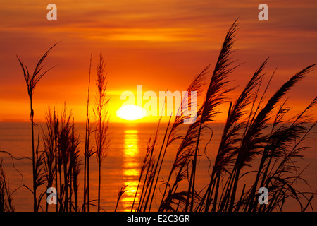The sun sets, over the ocean, with pampas grass in the foreground - Stock Image