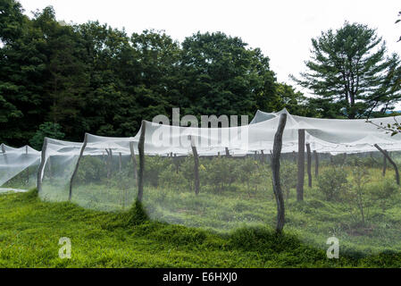 protective garden fabric draped over tree limbs - Stock Image