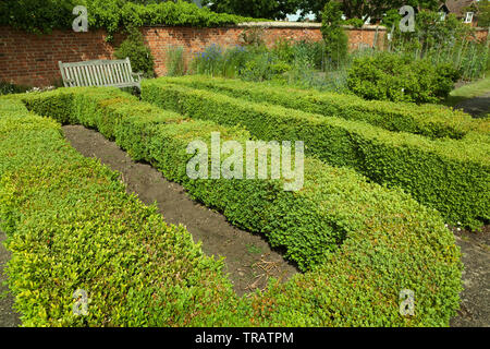 Box hedging, low form in a well kept garden - Stock Image
