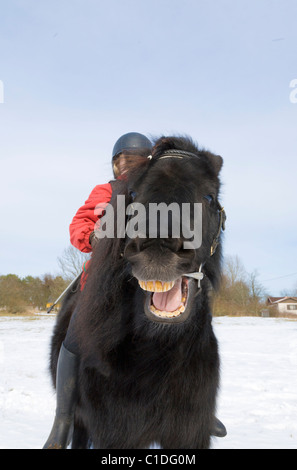 Black pony laughing. - Stock Image