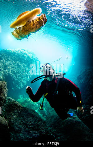 Young female diver looks at fried egg jellyfish while scuba diving in a cavern - Stock Image