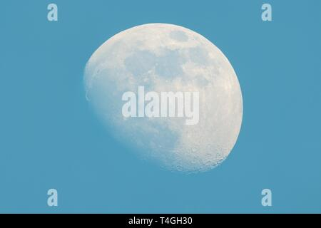 Moon in Waxing Gibbous phase on the daytime blue sky - Stock Image
