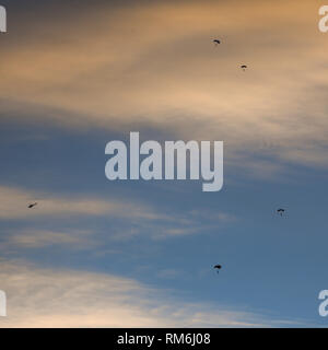 Silhouette of parachutist flying slowly on parachute in the sky at sunset after jumping from a helicopter. - Stock Image