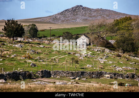 field full of granite boulders rough tor in background on bodmin moor, Cornwall. - Stock Image