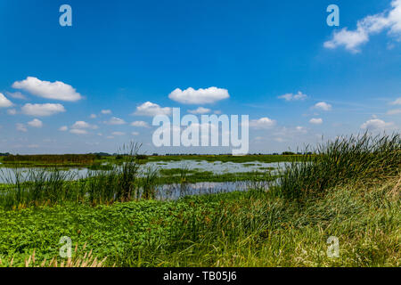 Lush Vegetation created by steady rains at the Merced National Wildlife Refuge in the Central Valley of California USA - Stock Image
