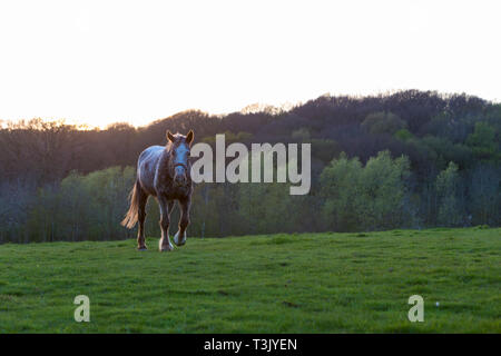 Ashford, Kent, UK. 10th Apr, 2019. UK Weather: The sun sets after a lovely sunny day in Ashford, Kent as a horse running in a field. © Paul Lawrenson 2019, Photo Credit: Paul Lawrenson/ Alamy Live News - Stock Image