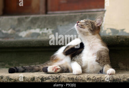 Scratching street cat in Lviv - Stock Image
