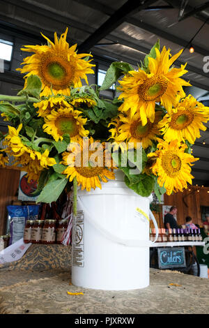 Bucket of cut fresh sunflower blooms on display in a country store or farm market, or farmer's market, in rural Pike Road Alabama, USA. - Stock Image