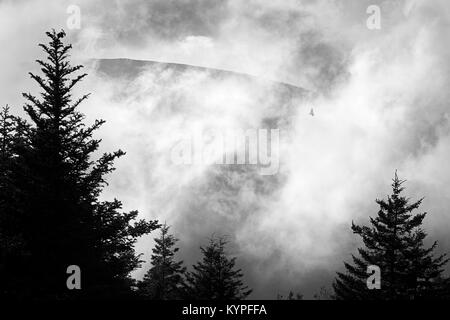 Dramatic clearing fog with raptor silhouette on Cadillac Mountain in Acadia National Park in Maine - Stock Image