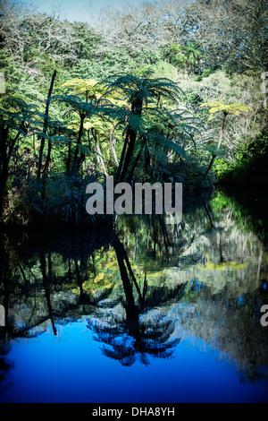 Tree ferns overhang lake, New Zealand - Stock Image