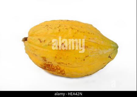 Cocoa pod on white background - Stock Image