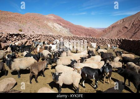 Chili - Stock Image