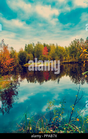 The forest lake overgrown with grass, small deciduous forest and shrubs in yellow-red autumn colors - Stock Image