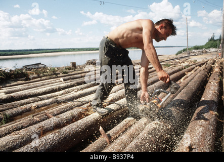 Processing timber at the Lukovitsky enterprise in the Arkhangelsk Region - Stock Image