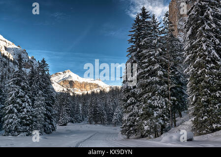path and trees in the snowy forest with mountain an clouds in background, Gardena Valley - Dolomiti, Trentino-Alto - Stock Image