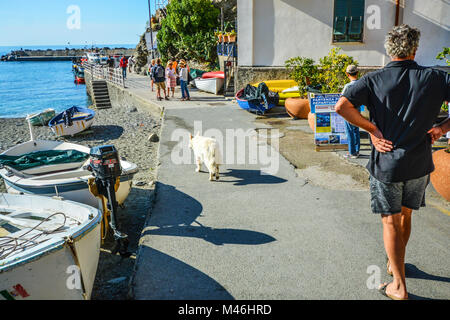 A man walks his long haired white dog along a path by the sandy beach and harbour at Monterosso Al Mare, Cinque - Stock Image