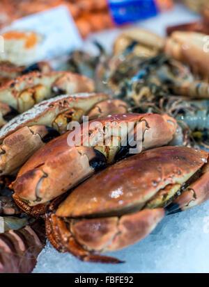 High Angle View Of Crabs On Display - Stock Image